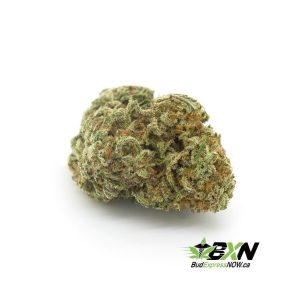 Nuken - ON SALE ($149 / OZ)