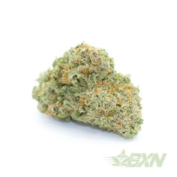 Dutch-Treat-RAW1