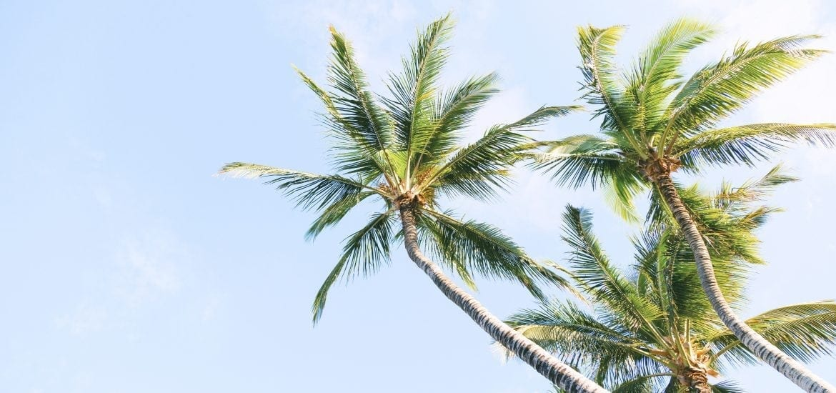 Cannabis and Coconuts