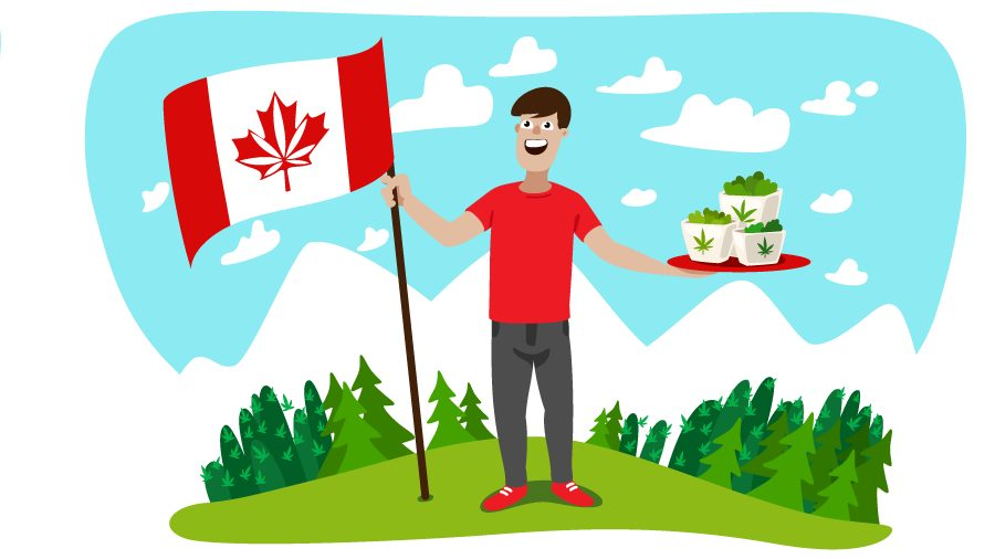 Top Weed Strains Grown in Canada