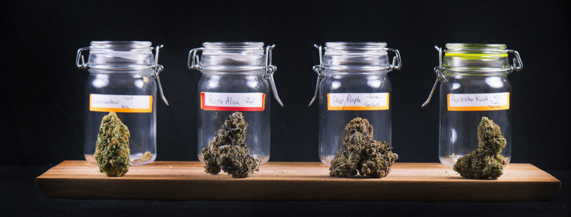 How to Choose the Right Strain