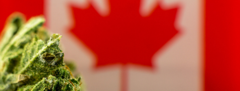 Do You Need a Medical Marijuana Card in Canada