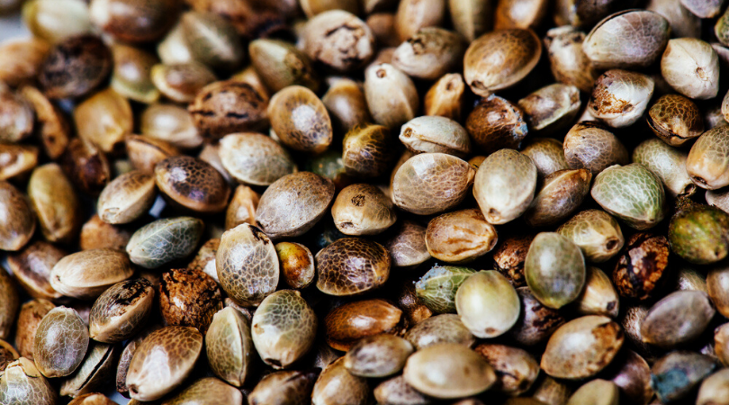 Cannabis Seeds 101