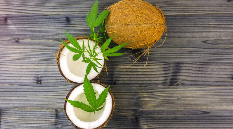 How to Make Marijuana Infused Coconut Oil