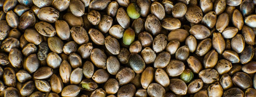 When To Buy Hybrid Seeds