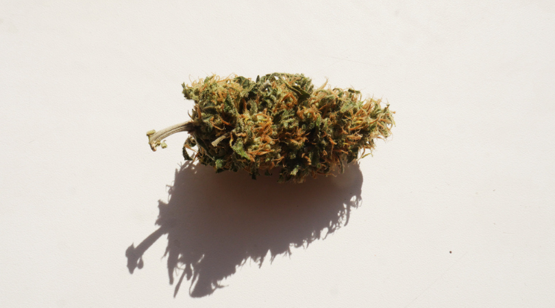 Top Cannabis Strains To Fight Fatigue