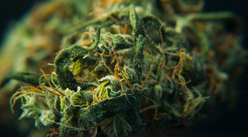 How Does Cannabis Work as an Appetite Suppressant